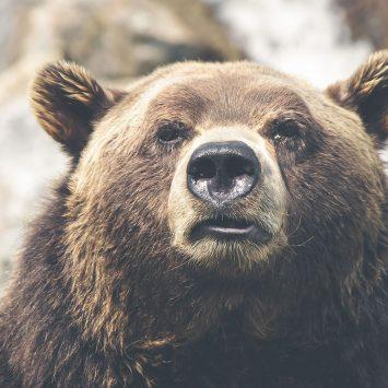 Weird bear time